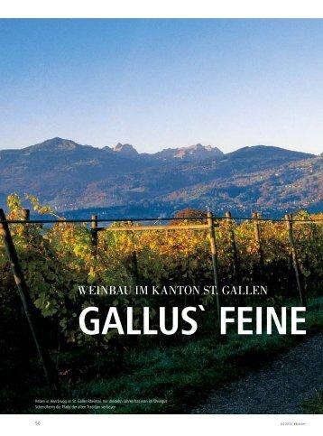 gallus` feine
