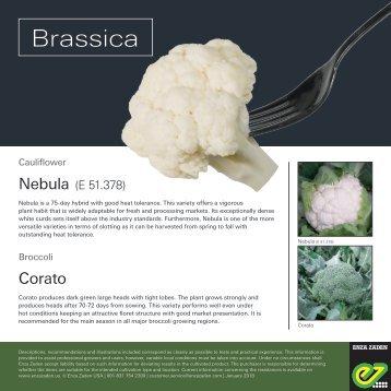 Leaflet Brassica 2018