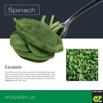 Leaflet Spinach 2018