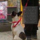 Catálogo It Dog_online - Page 3