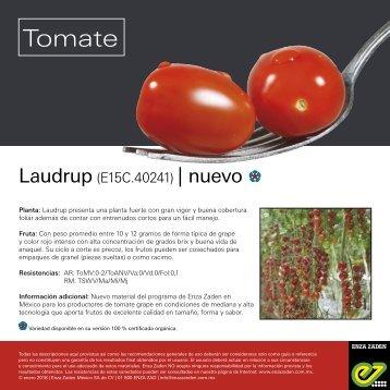 Leaflet Laudrup 2018