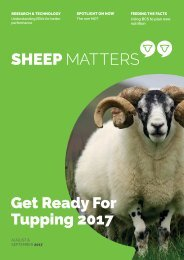 Sheep Matters_Aug-Sept 17 (redesigned)