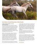 Agrodieren.be Reitsport Pferd Ausrüstung Reitausrüstung Stallausrüstung Katalog 2018 - Seite 2