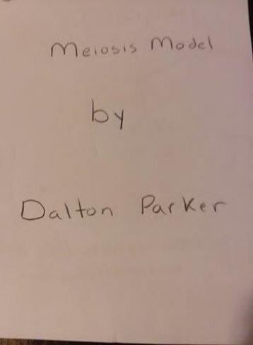 Meiosis Model Page 1pdf