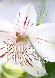 HilverdaKooij-Schnittblumen