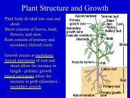 Plant Structure.pdf