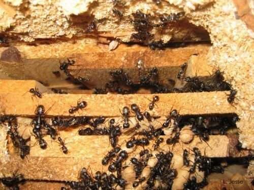 Where to find the Best Exterminator in Kelowna