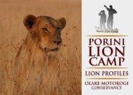 Olare Motorogi Conservancy: Lion Profiles