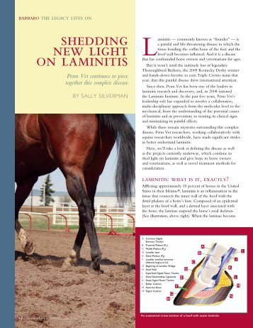 shedding new light on laminitis - University of Pennsylvania School ...