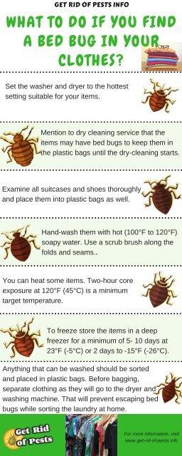 bed bugs svenska