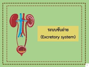 4 Excretory system