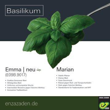 Leaflet Basilikum 2018