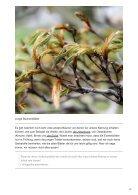 Welche Blätter von Bäumen können wir essen - Page 7