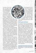 Landraub - Indigener Widerstand in Lateinamerika - Seite 7
