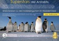 Program Highlights Penguin Species - agentur für erlebnisreisen