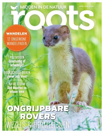 Roots editie 4 - april 2018