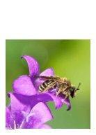 Bijenplan- Bijengezondheid, ook onze gezondheid - Page 4