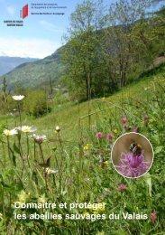 Connaître et protéger les abeilles sauvages du Valais