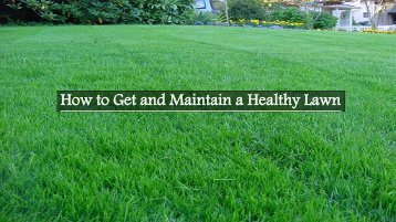 How to Get and Maintain a Healthy Lawn