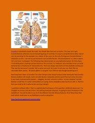 Cervello - Review