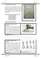 Evolución - Page 7