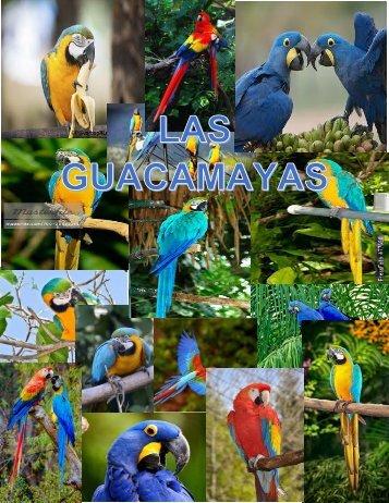 LAS GUACAMAYASs