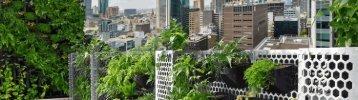 Vertical Gardens Melbourne Wall Gardens Melbourne AVGG VIC