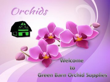 Best Online Orchid Supplies in Florida
