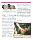 Alegraos 15 - Page 7