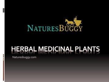 Benefits of Herbal medicinal plants.ppt