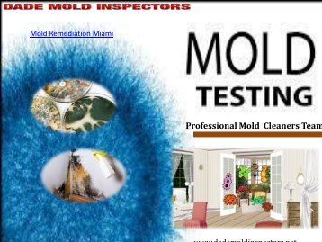 Professional Mold  Cleaners Team
