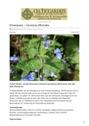 Ehrenpreis  Veronica officinalis