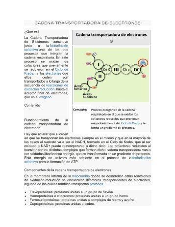 CADENA TRANSPORTADORA DE ELECTRONES  22