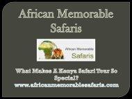 What Makes A Kenya Safari Tour So Special