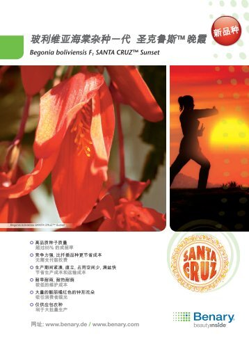 Begonia boliviensis F1 Santa Cruz™ Sunset - Benary