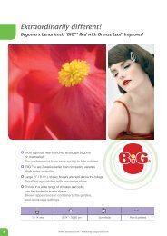Begonia x benariensis 'BIG™ Red with Bronze Leaf' - Benary