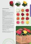 Viola wittrockiana - Benary - Page 5