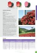 Viola wittrockiana - Benary - Page 7