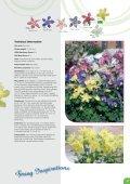 Benary News 2009 · 2010 - Page 5