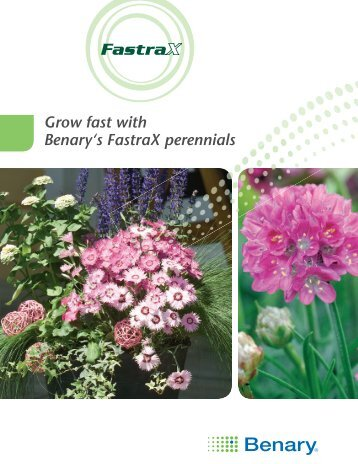 Grow fast with Benary's FastraX perennials