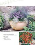 Grow fast with Benary's FastraX perennials - Page 3