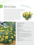 Grow fast with Benary's FastraX perennials - Page 5