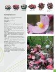 English (North America) - Benary - Page 5