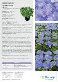 Ageratum houstonianum Blue HAwAii 5.0 - Benary - Page 2