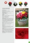 Deutsch - Benary - Page 5