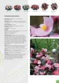 Deutsch - Benary - Page 7