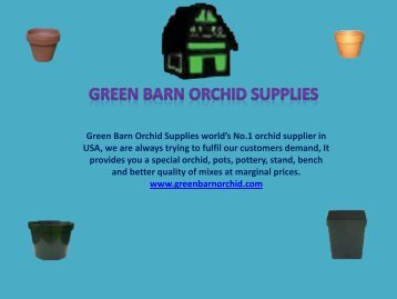 Buy Online Decorative Orchid Pots in Florida