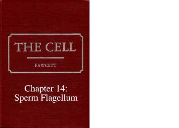 Chapter 14: Sperm Flagellum