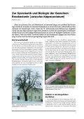 Das Holz der Rosskastanie - Bayerische Landesanstalt für Wald und ... - Seite 7