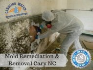 Mold Remediation & Removal Cary NC